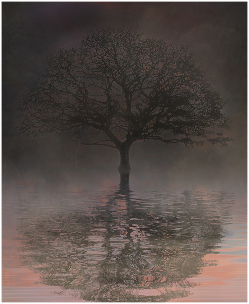 C David Evans - Reflection in the Mist