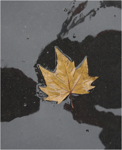 C Autumn Leaf In The Rain - Val Comerford