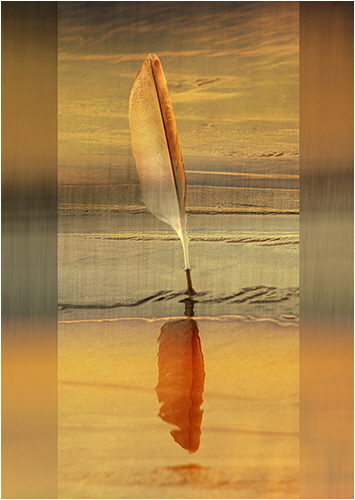 HC Sunset Feather - Sheila Jones