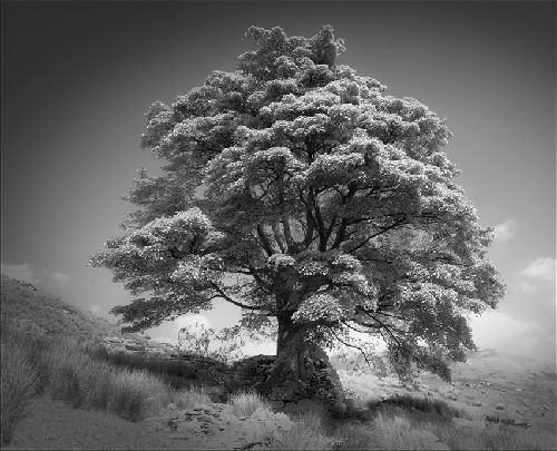 Ron Williams Lone Tree